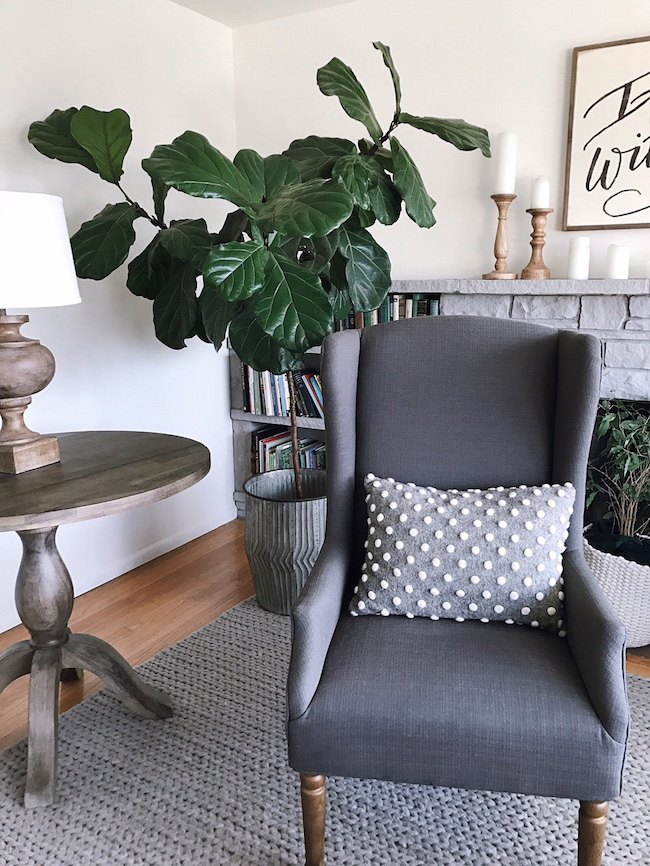 Thriving Fiddle Leaf Fig & Healthy Home Story