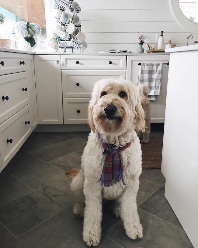 How Do You Keep a Clean House with Dogs?