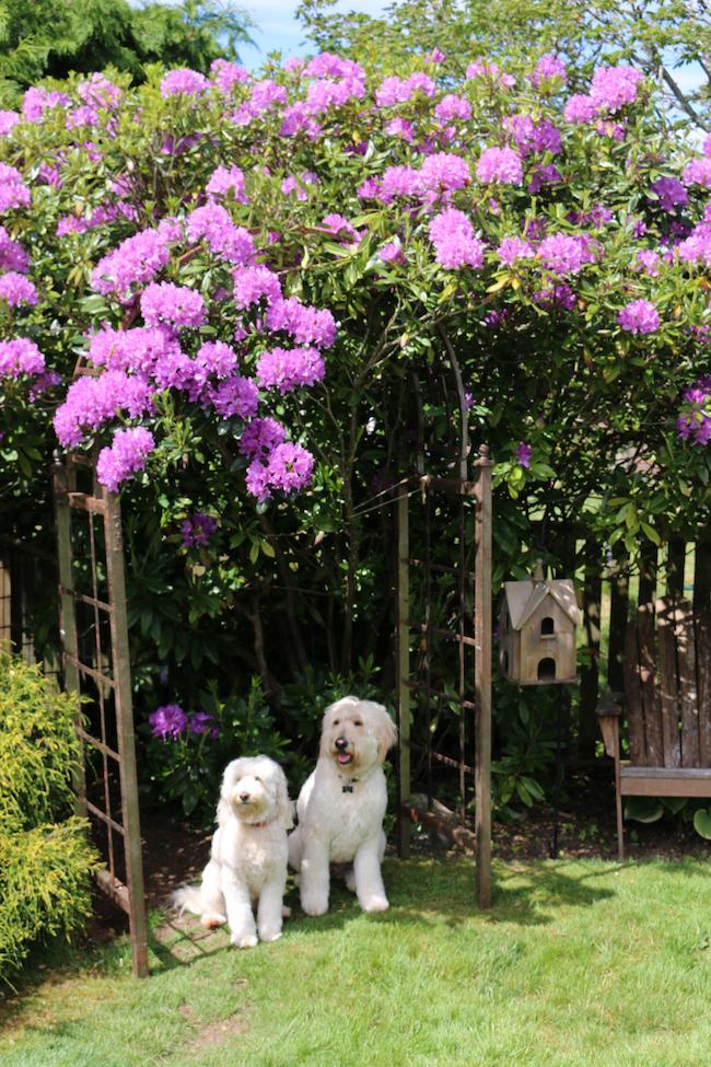 Spring Gardening in My Yard