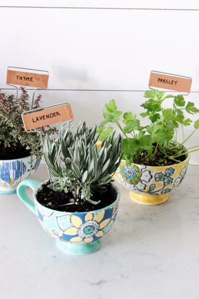 DIY Coffee Mug Herb Garden