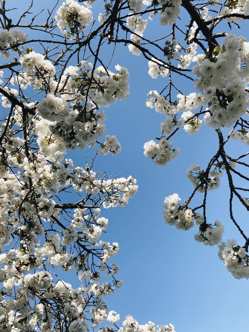 Calming Stress + Spring Diffuser Blends