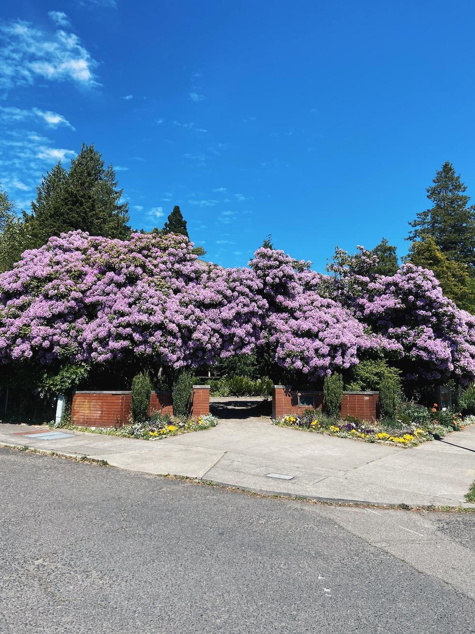 Neighborhood Walk in Queen Anne, Seattle {Drive By}