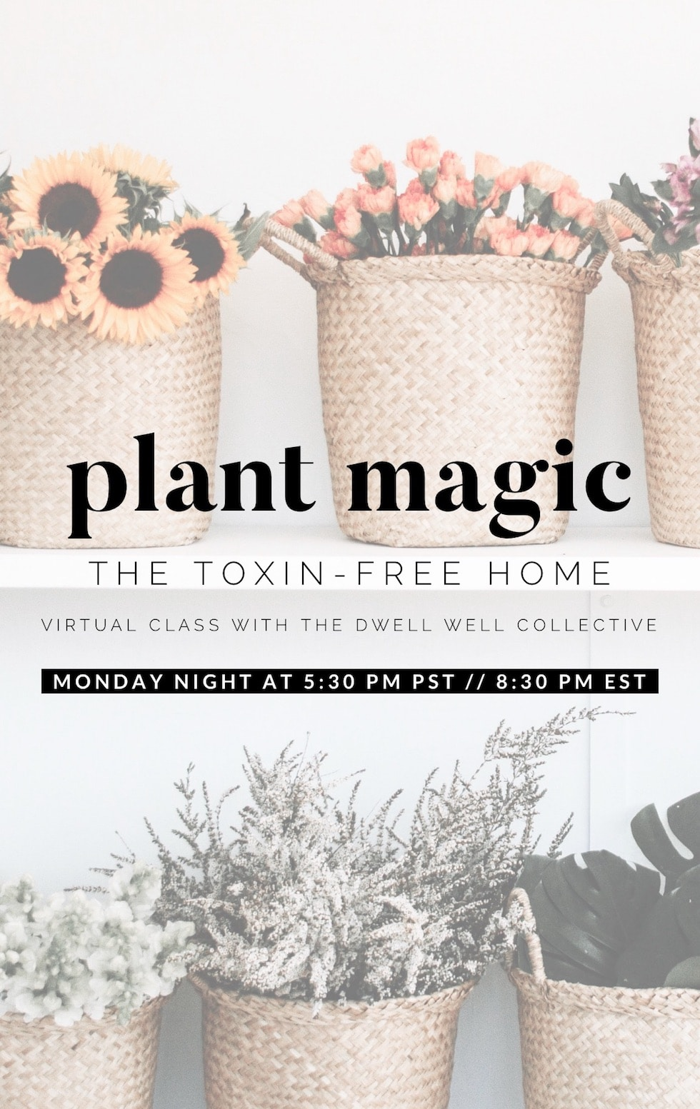 Plant Magic: The Toxin-Free Home (Virtual Class)