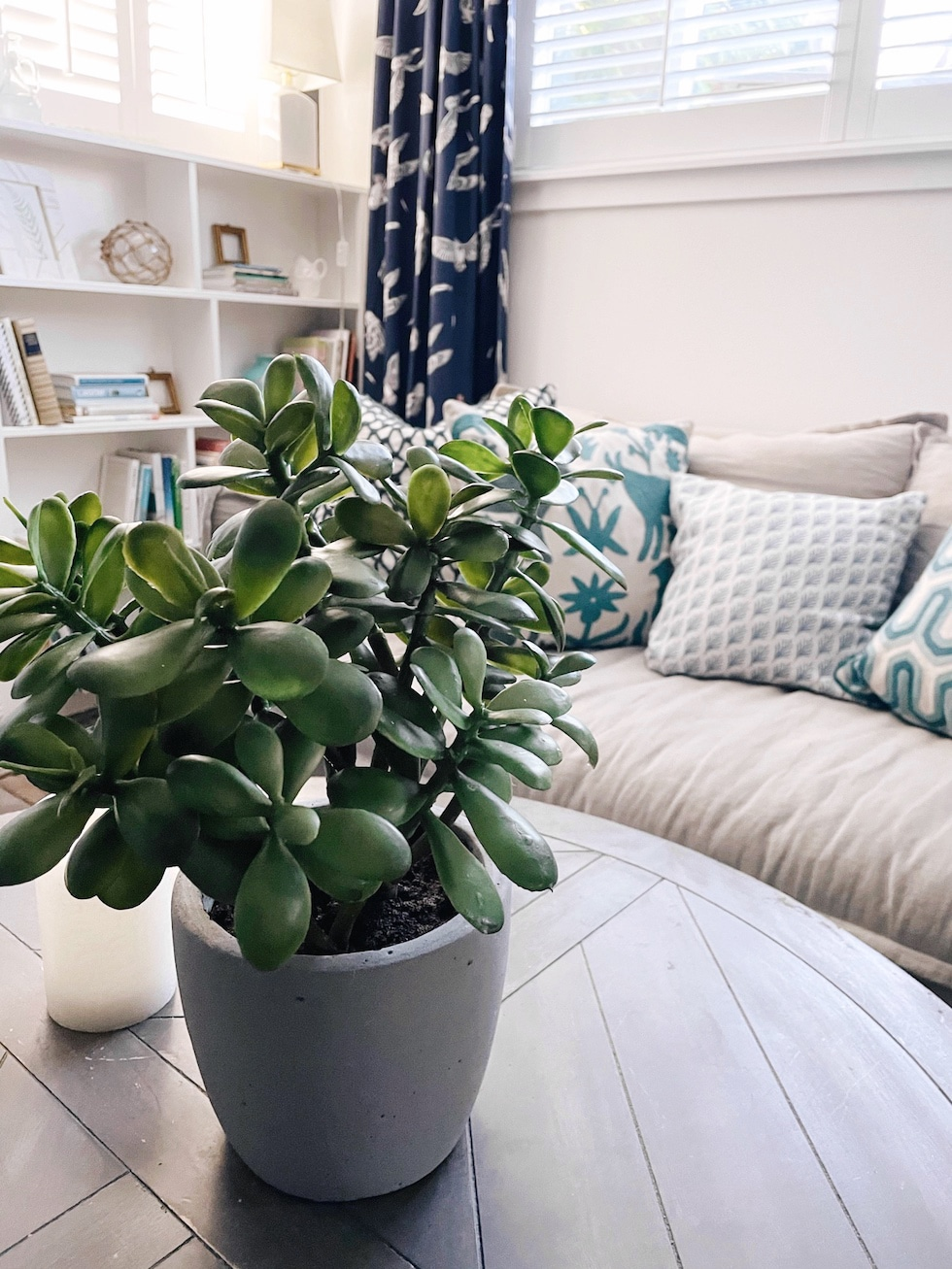 Designer Decorating Secret: Realistic Faux Plants