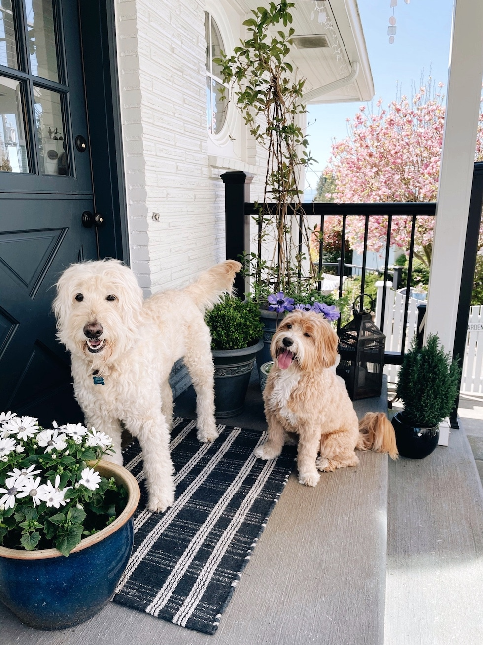 Life Lately: Dogs, and More Dogs, and More Moving!