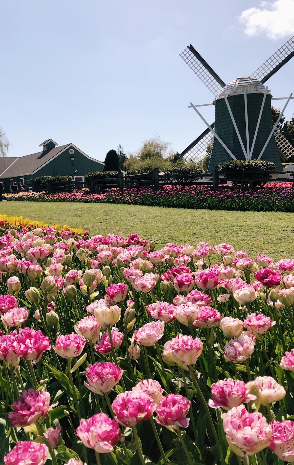 Out to See: Tulip Festival Roozengaarde (Washington State)